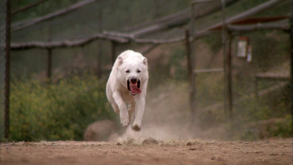 samuel-fuller-White-Dog